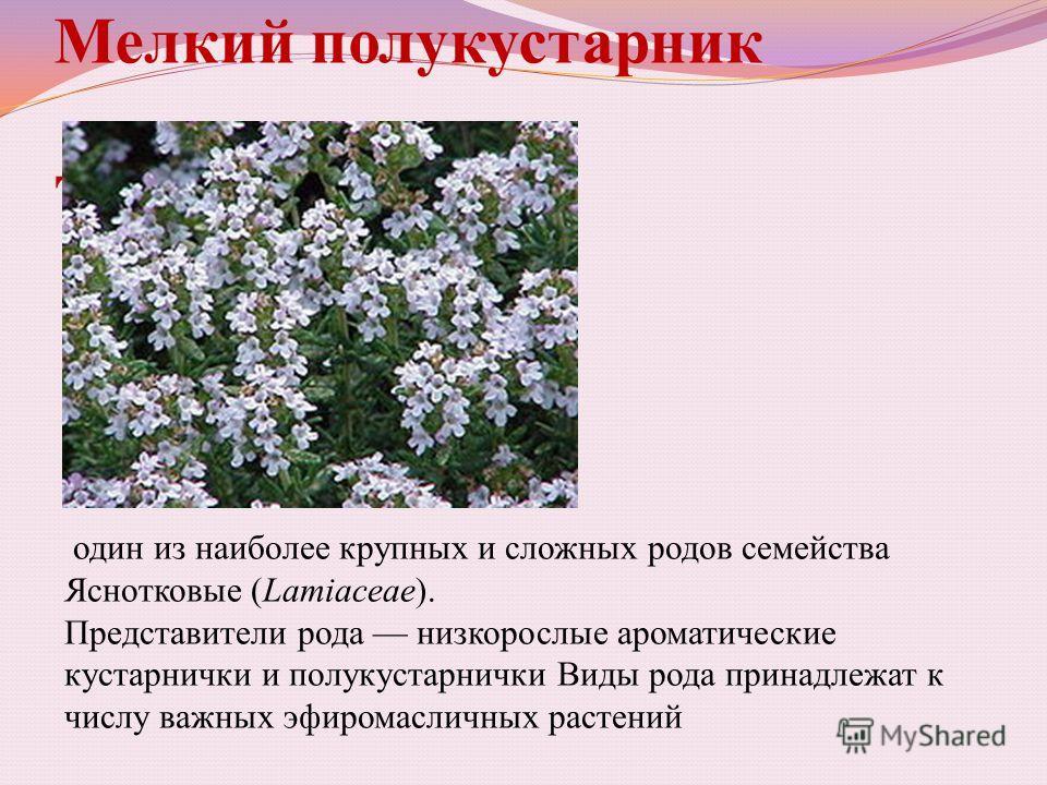Мелкий полукустарник Тимьян один из наиболее крупных и сложных родов семейства Яснотковые (Lamiaceae). Представители рода низкорослые ароматические кустарнички и полукустарнички Виды рода принадлежат к числу важных эфиромасличных растений