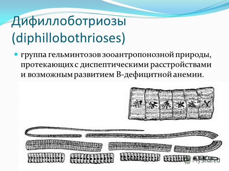 Дифиллоботриозы (diphillobothrioses) группа гельминтозов зооантропонозной природы, протекающих с диспептическими расстройствами и возможным развитием В-дефицитной анемии.