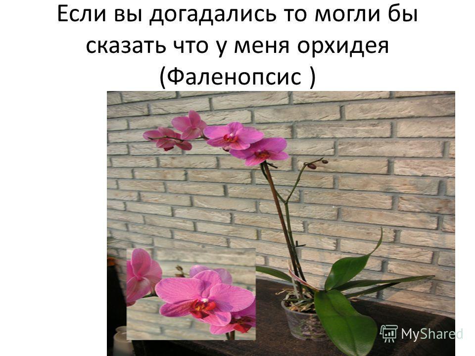 Если вы догадались то могли бы сказать что у меня орхидея (Фаленопсис )