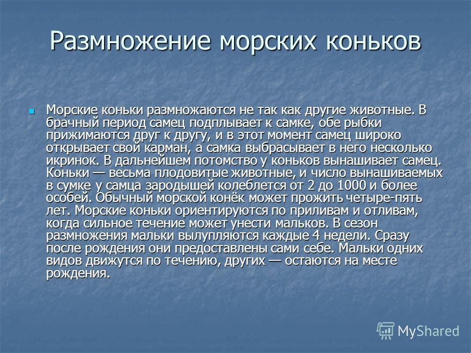 Размножение морских коньков Морские коньки размножаются не так как другие животные. В брачный период самец подплывает к самке, обе рыбки прижимаются друг к другу, и в этот момент самец широко открывает свой карман, а самка выбрасывает в него нескольк