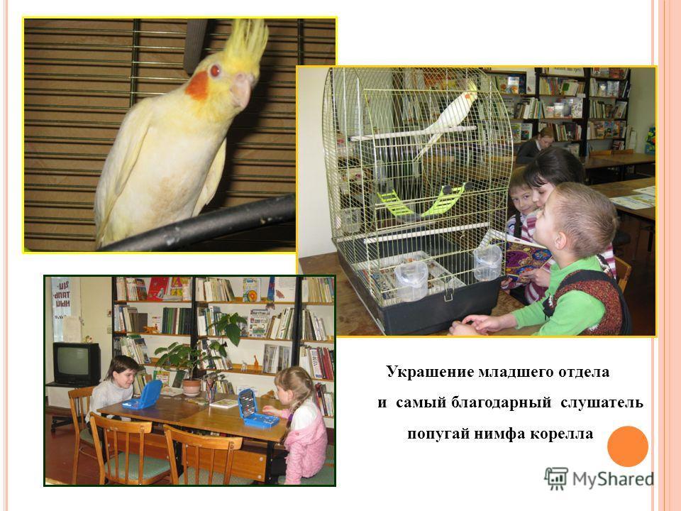 Украшение младшего отдела и самый благодарный слушатель попугай нимфа корелла