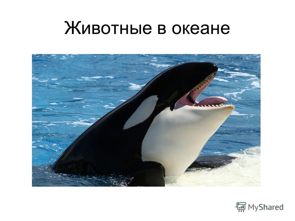 Животные в океане