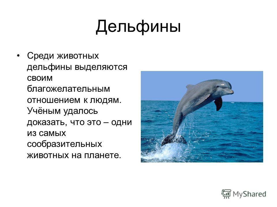 Дельфины Среди животных дельфины выделяются своим благожелательным отношением к людям. Учёным удалось доказать, что это – одни из самых сообразительных животных на планете.