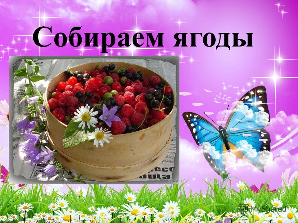 Собираем ягоды