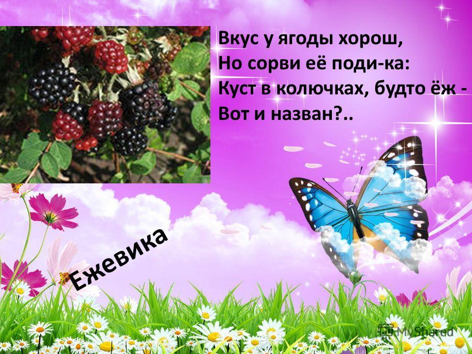 Ежевика Вкус у ягоды хорош, Но сорви её поди-ка: Куст в колючках, будто ёж - Вот и назван?..