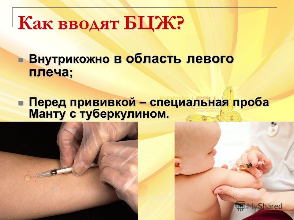 Как вводят БЦЖ? Внутрикожно в область левого плеча ; Внутрикожно в область левого плеча ; Перед прививкой – специальная проба Манту с туберкулином. Перед прививкой – специальная проба Манту с туберкулином.