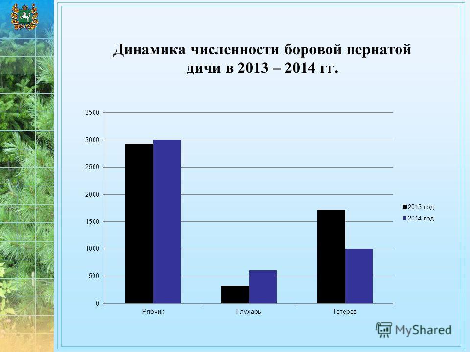Динамика численности боровой пернатой дичи в 2013 – 2014 гг.