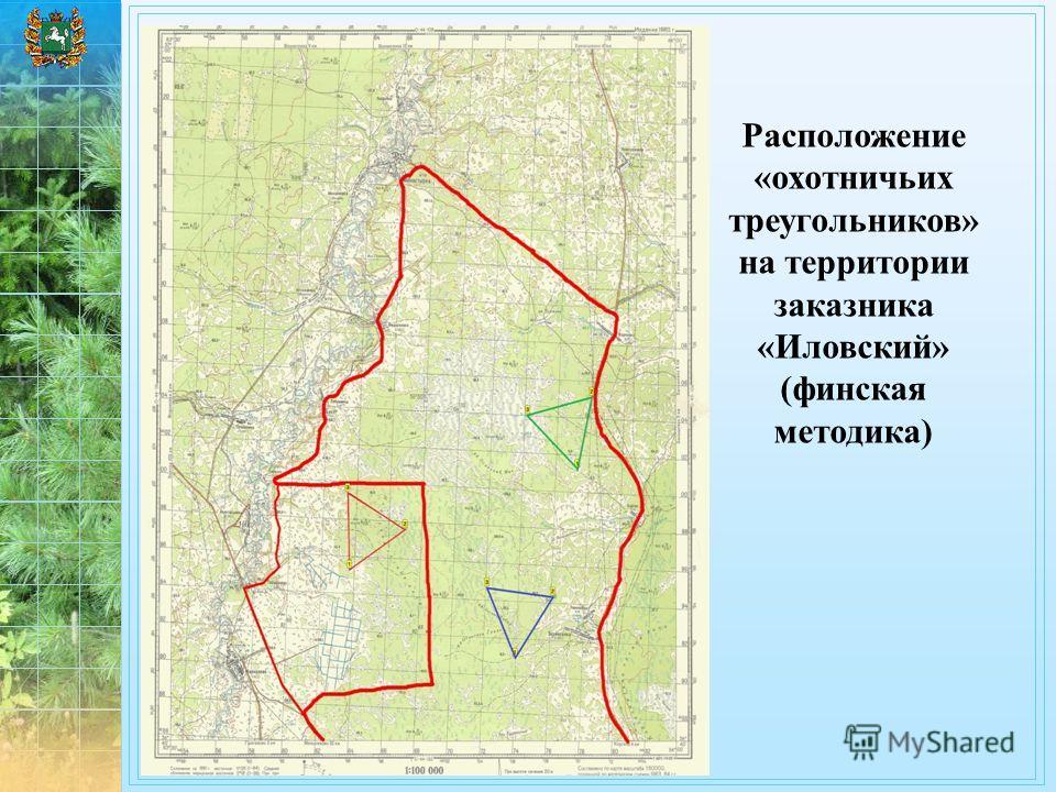 Расположение «охотничьих треугольников» на территории заказника «Иловский» (финская методика)
