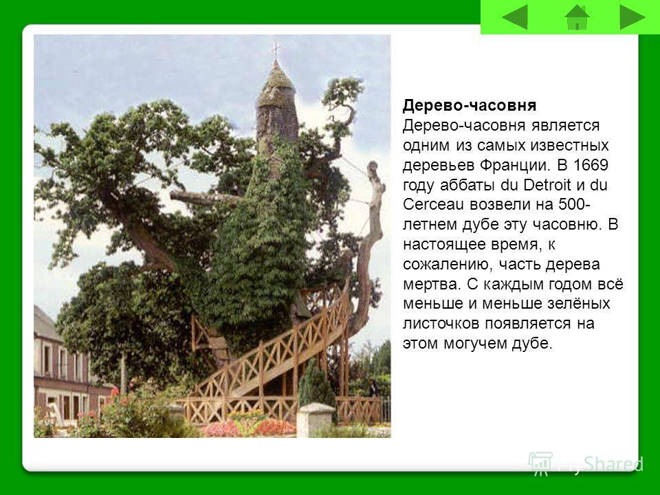 Дерево-часовня Дерево-часовня является одним из самых известных деревьев Франции. В 1669 году аббаты du Detroit и du Cerceau возвели на 500- летнем дубе эту часовню. В настоящее время, к сожалению, часть дерева мертва. С каждым годом всё меньше и мен