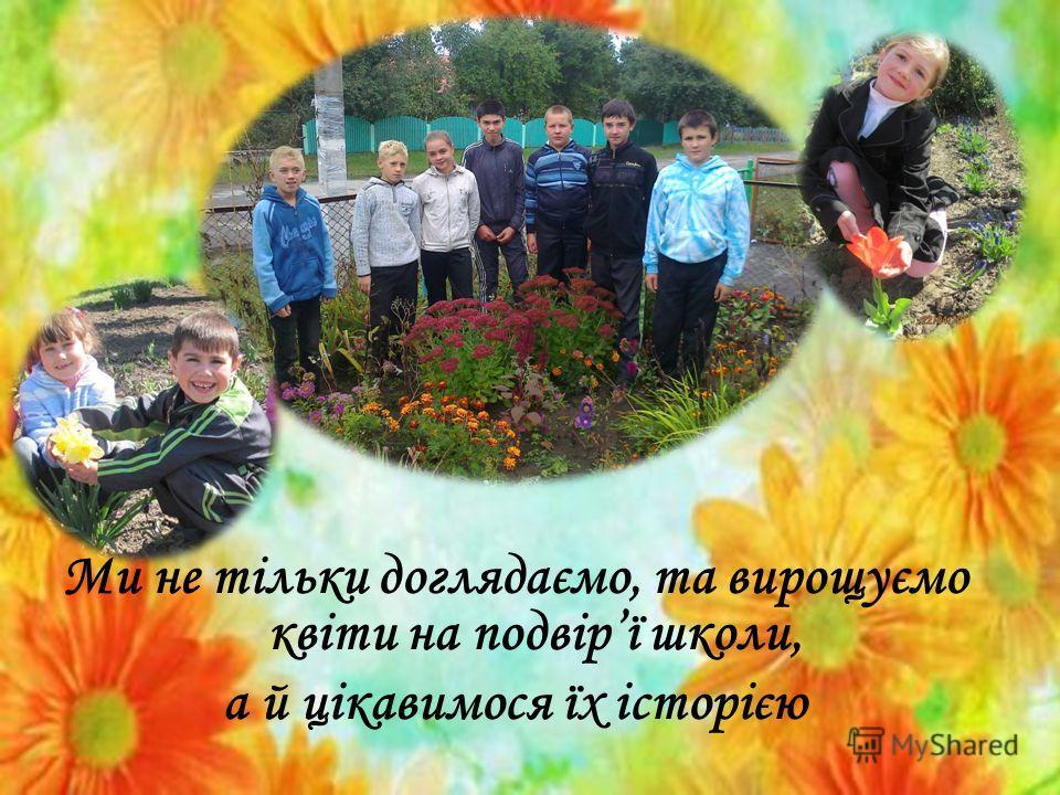 Ми не тільки доглядаємо, та вирощуємо квіти на подвірї школи, а й цікавимося їх історією