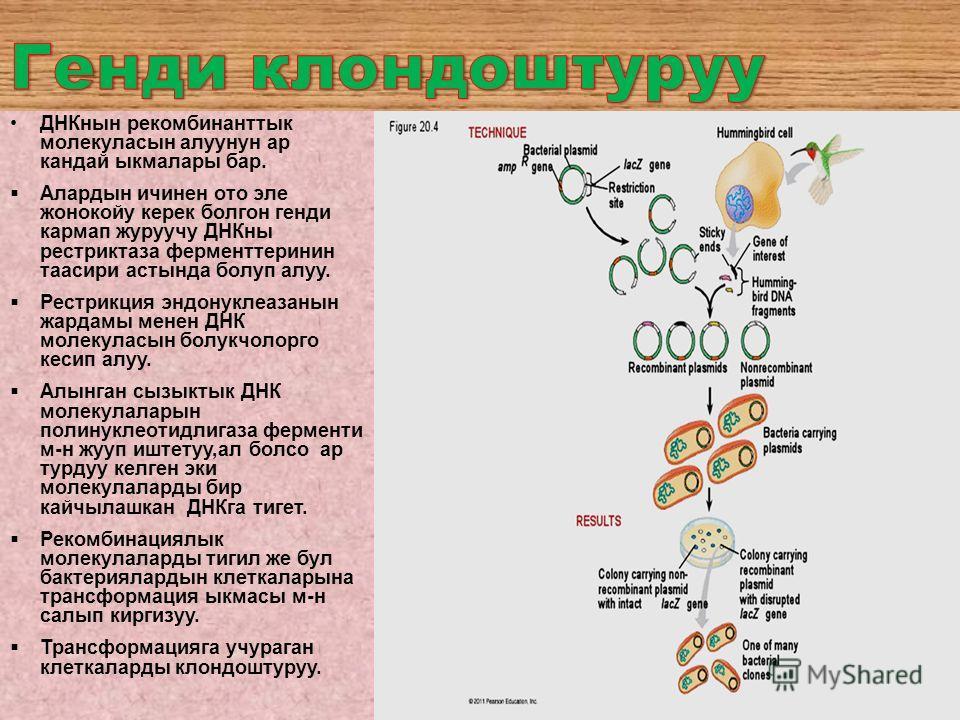 ДНКнын рекомбинанттык молекуласын алуунун ар кандай ыкмалары бар. Алардын ичинен ото эле жонокойу керек болгон генди кармап журуучу ДНКны рестриктаза ферменттеринин таасири астында болуп алуу. Рестрикция эндонуклеазанын жардамы менен ДНК молекуласын