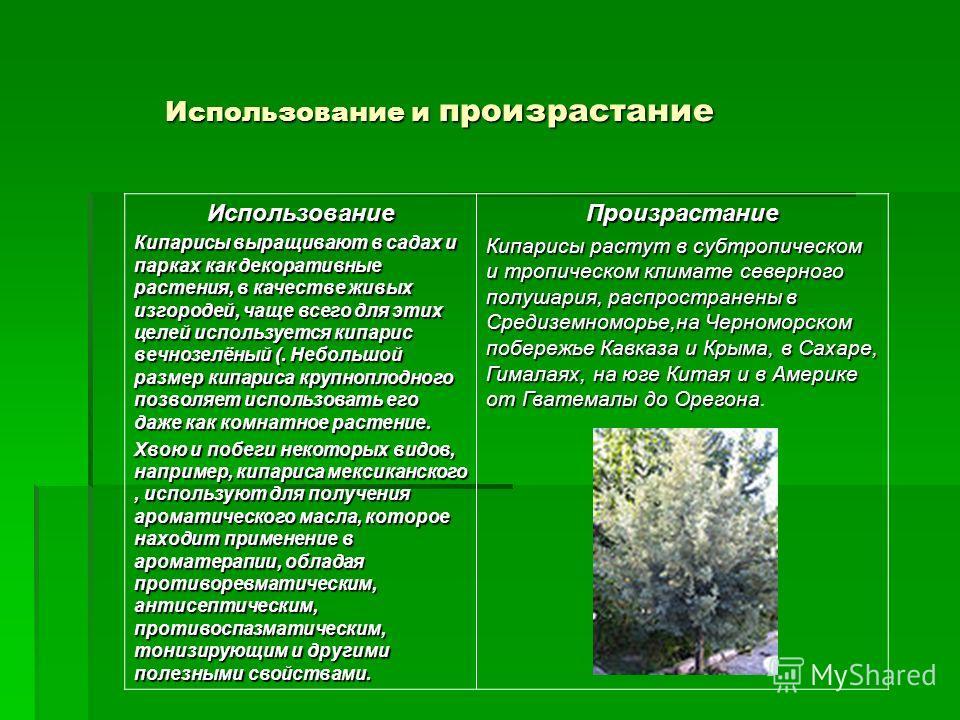 Использование и произрастание Использование Кипарисы выращивают в садах и парках как декоративные растения, в качестве живых изгородей, чаще всего для этих целей используется кипарис вечнозелёный (. Небольшой размер кипариса крупноплодного позволяет