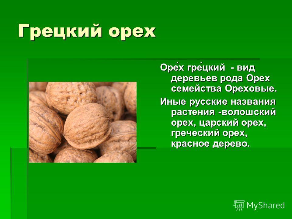 Грецкий орех Оре́х гре́цкий - вид деревьев рода Орех семейства Ореховые. Иные русские названия растения -волошский орех, царский орех, греческий орех, красное дерево.