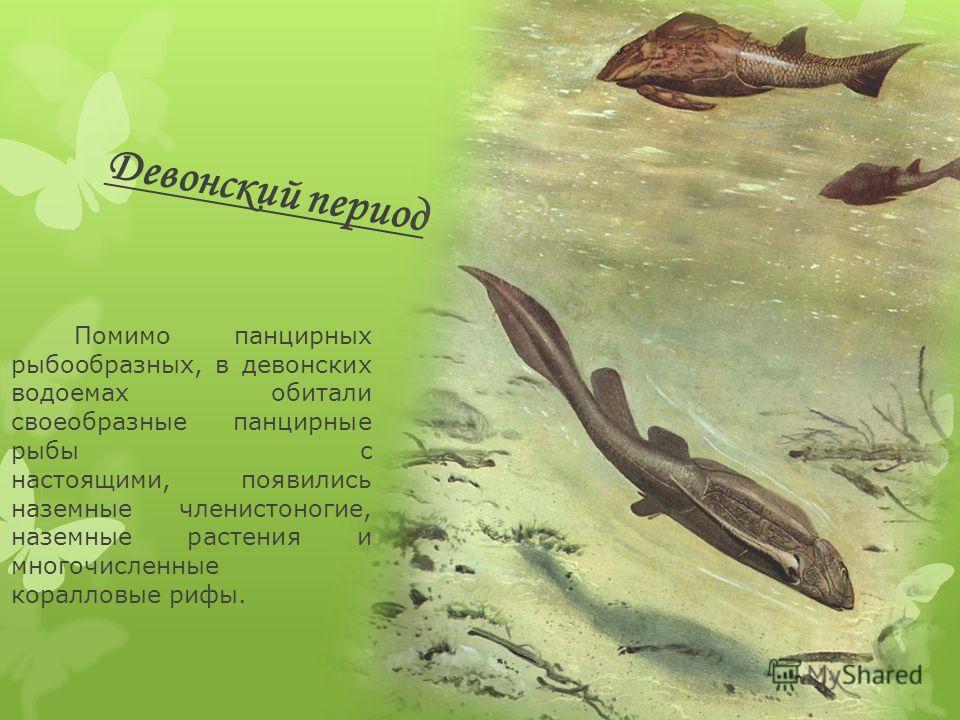 Девонский период Помимо панцирных рыбообразных, в девонских водоемах обитали своеобразные панцирные рыбы с настоящими, появились наземные членистоногие, наземные растения и многочисленные коралловые рифы.