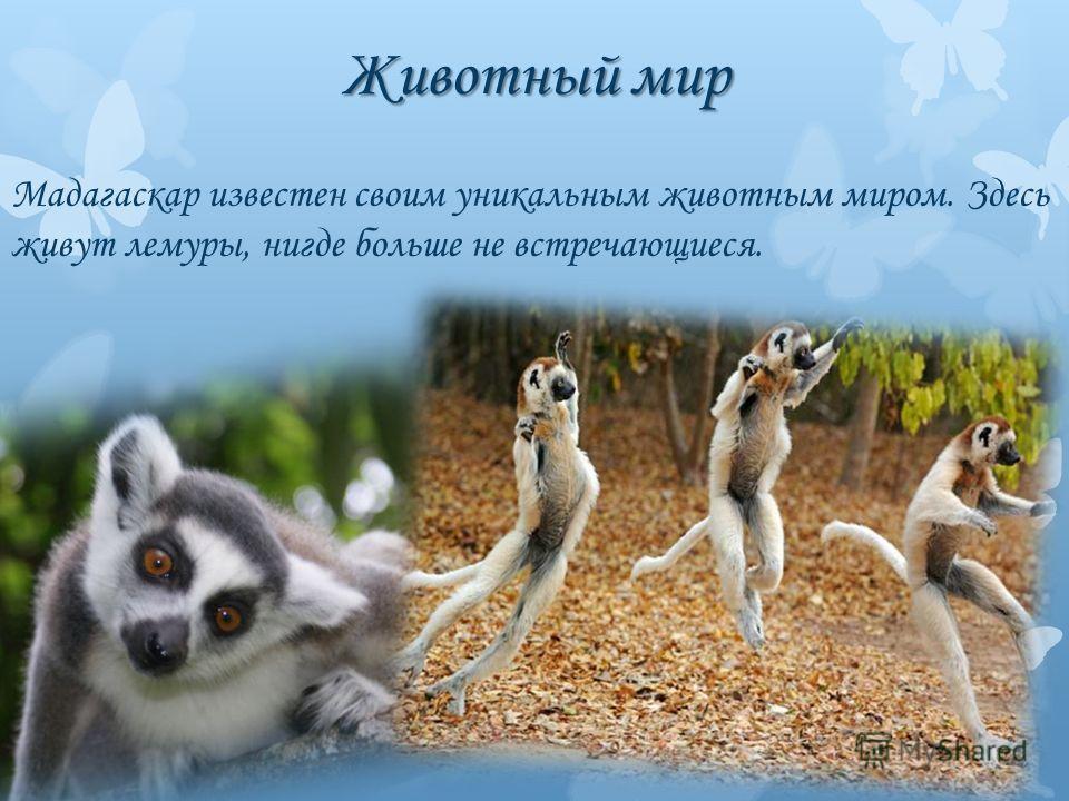 Животный мир Мадагаскар известен своим уникальным животным миром. Здесь живут лемуры, нигде больше не встречающиеся.