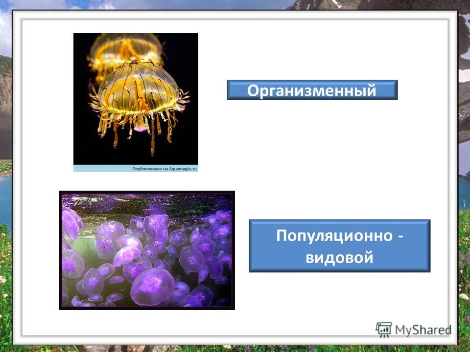 Организменный Популяционно - видовой