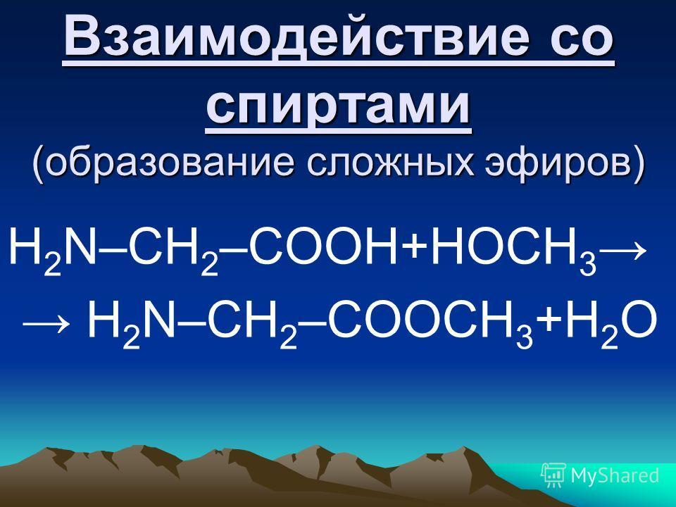 Взаимодействие со спиртами (образование сложных эфиров) H 2 N–CH 2 –COOH+НОСН 3 H 2 N–CH 2 –COOСH 3 +Н 2 О