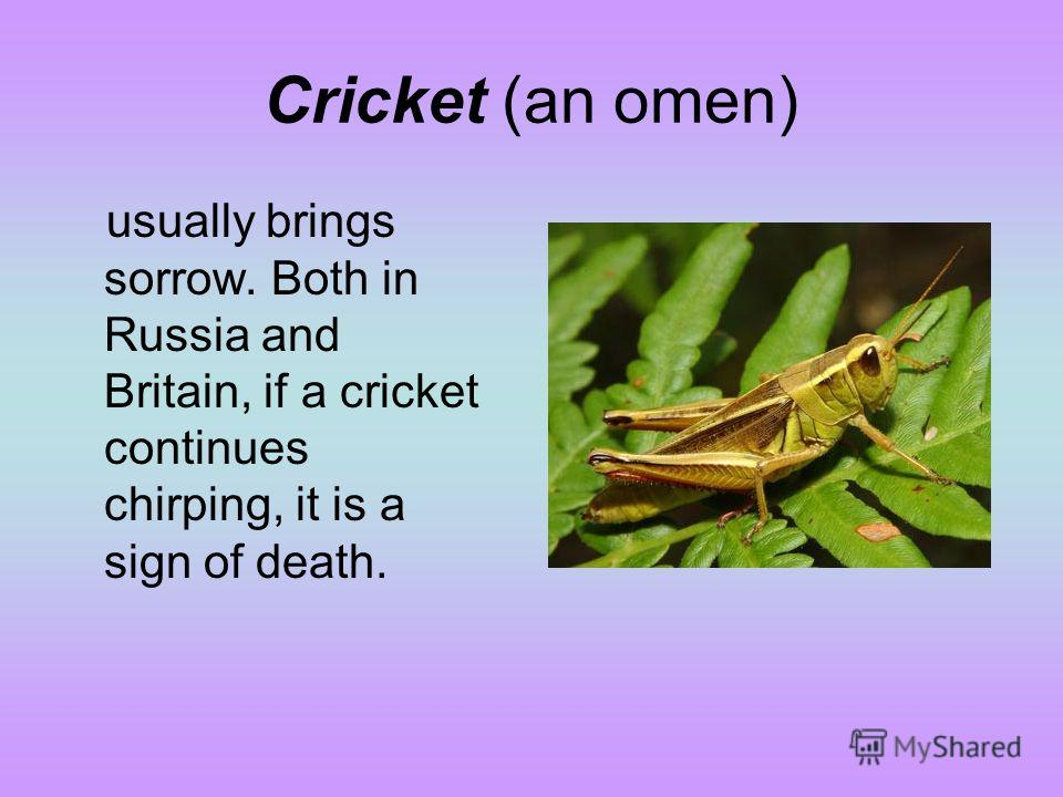 Cricket (an omen) usually brings sorrow. Both in Russia and Britain, if a cricket continues chirping, it is a sign of death.