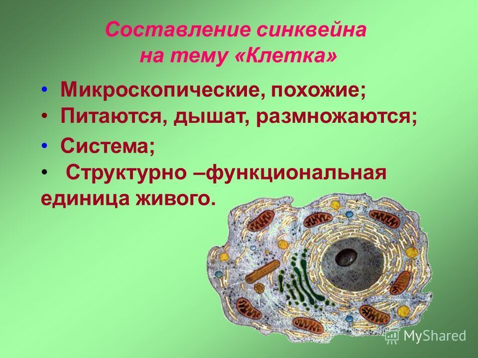 Микроскопические, похожие; Питаются, дышат, размножаются; Структурно –функциональная единица живого. Составление синквейна на тему «Клетка» Система;