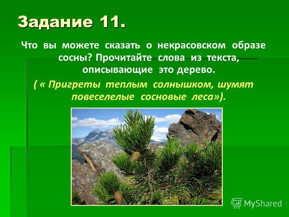 Задание 11. Что вы можете сказать о некрасовском образе сосны? Прочитайте слова из текста, описывающие это дерево. ( « Пригреты теплым солнышком, шумят повеселелые сосновые леса»).