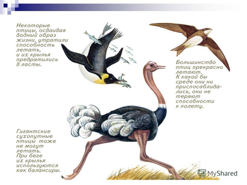 Ящерица летающий дракон прыгает с ветки на ветку, планируя на боковых складках кожи, растянутой на ребрах.