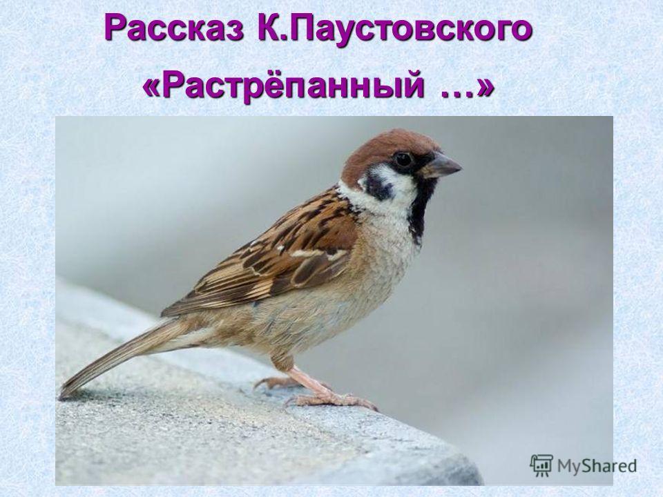 Рассказ К.Паустовского «Растрёпанный …»