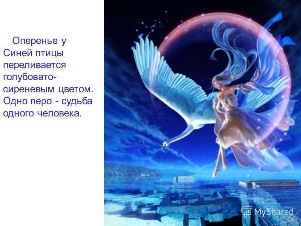 Оперенье у Синей птицы переливается голубовато- сиреневым цветом. Одно перо - судьба одного человека.