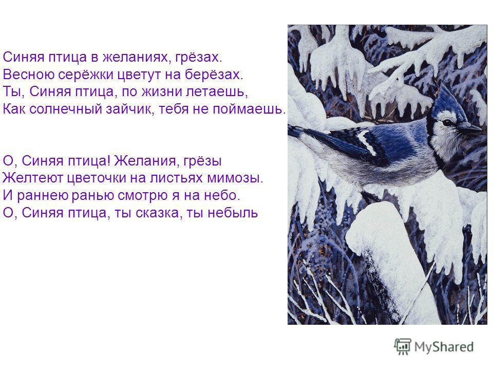Синяя птица в желаниях, грёзах. Весною серёжки цветут на берёзах. Ты, Синяя птица, по жизни летаешь, Как солнечный зайчик, тебя не поймаешь. О, Синяя птица! Желания, грёзы Желтеют цветочки на листьях мимозы. И раннею ранью смотрю я на небо. О, Синяя