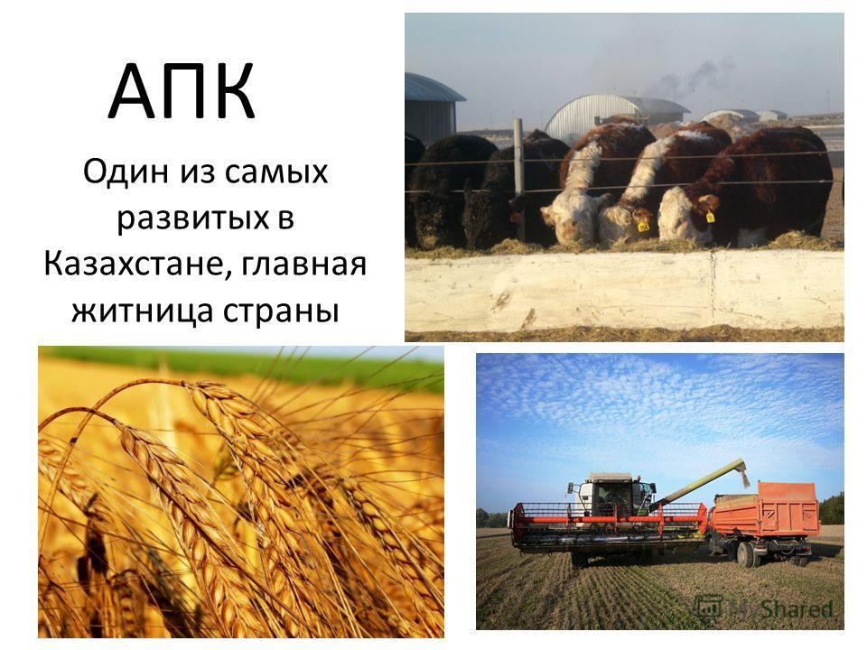 АПК Один из самых развитых в Казахстане, главная житница страны