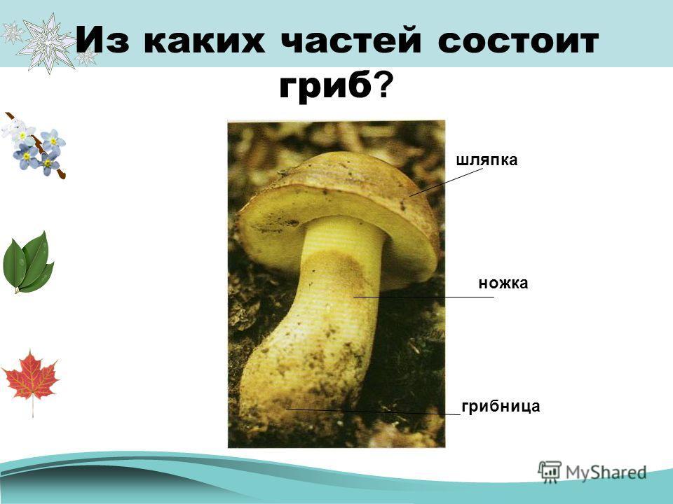 Из каких частей состоит гриб ? шляпка грибница ножка