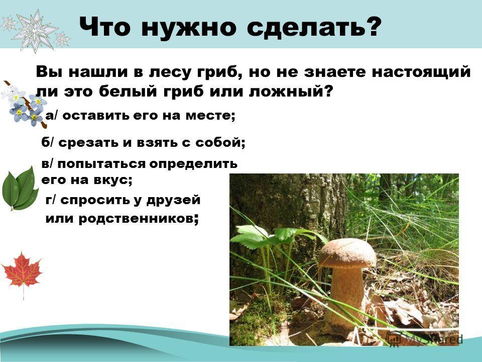 Что нужно сделать? Вы нашли в лесу гриб, но не знаете настоящий ли это белый гриб или ложный? а/ оставить его на месте; б/ срезать и взять с собой; в/ попытаться определить его на вкус; г/ спросить у друзей или родственников ;