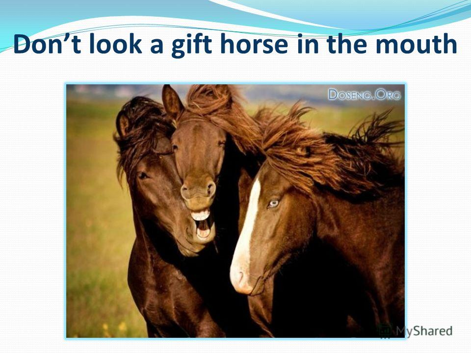Dont look a gift horse in the mouth