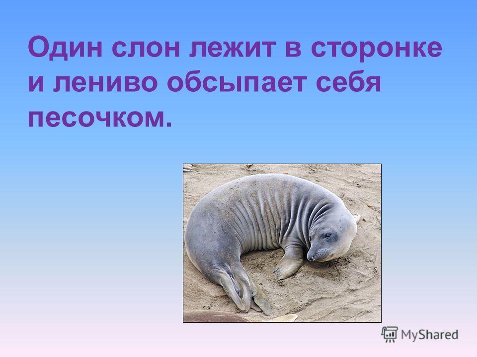 Один слон лежит в сторонке и лениво обсыпает себя песочком.