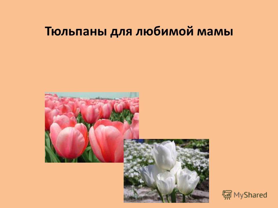 Тюльпаны для любимой мамы
