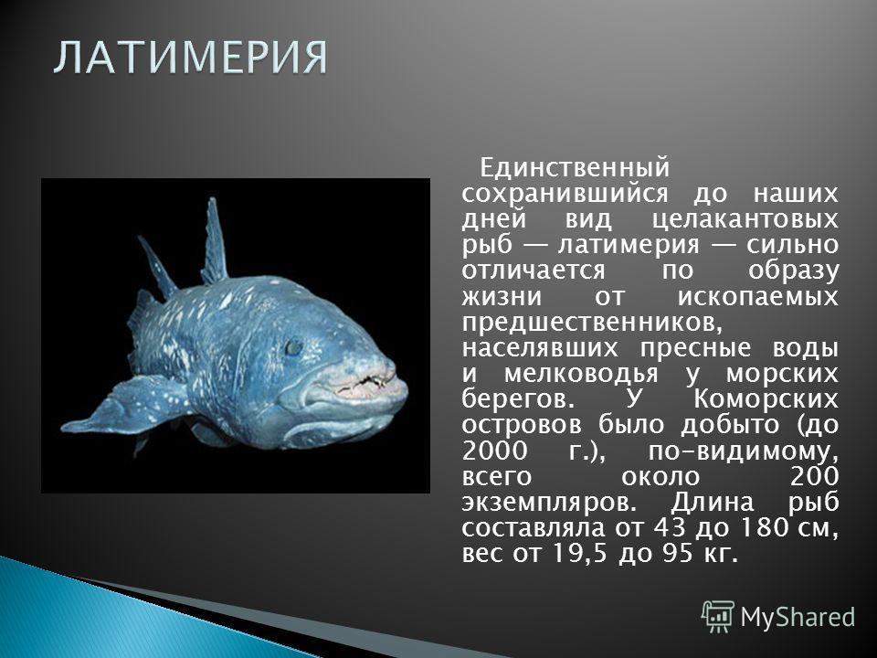 Единственный сохранившийся до наших дней вид целакантовых рыб латимерия сильно отличается по образу жизни от ископаемых предшественников, населявших пресные воды и мелководья у морских берегов. У Коморских островов было добыто (до 2000 г.), по-видимо