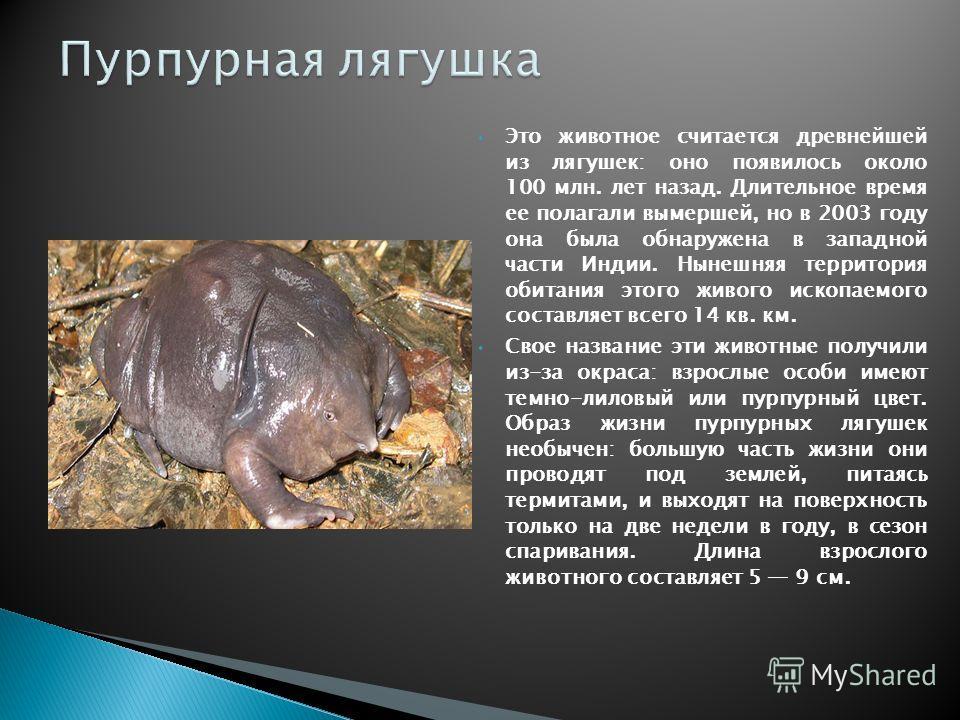 Это животное считается древнейшей из лягушек: оно появилось около 100 млн. лет назад. Длительное время ее полагали вымершей, но в 2003 году она была обнаружена в западной части Индии. Нынешняя территория обитания этого живого ископаемого составляет в