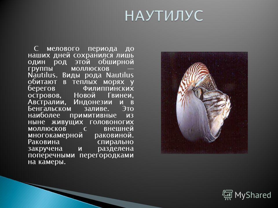 С мелового периода до наших дней сохранился лишь один род этой обширной группы моллюсков Nautilus. Виды рода Nautilus обитают в теплых морях у берегов Филиппинских островов, Новой Гвинеи, Австралии, Индонезии и в Бенгальском заливе. Это наиболее прим