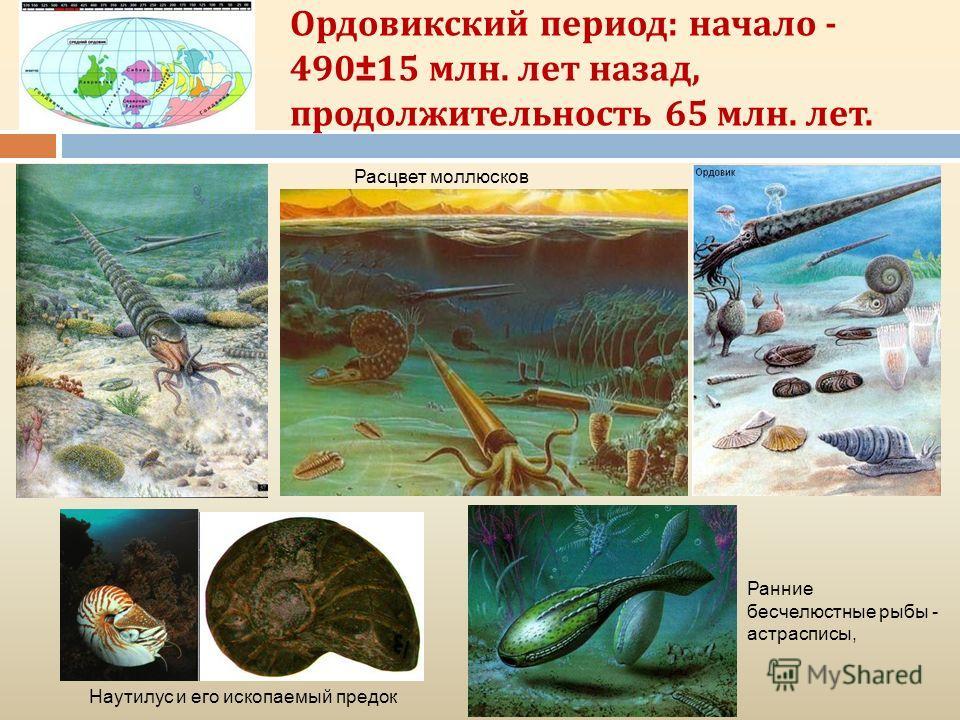 Ордовикский период: начало - 490±15 млн. лет назад, продолжительность 65 млн. лет. Наутилус и его ископаемый предок Расцвет моллюсков Ранние бесчелюстные рыбы - астрасписы,