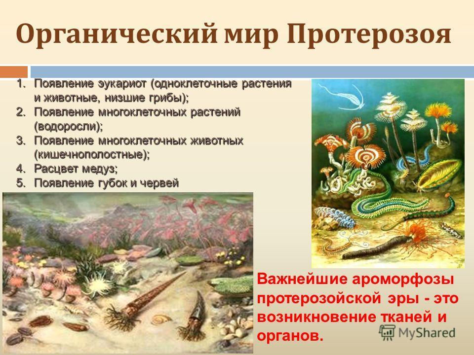 Органический мир Протерозоя 1.Появление эукариот (одноклеточные растения и животные, низшие грибы); 2.Появление многоклеточных растений (водоросли); 3.Появление многоклеточных животных (кишечнополостные); 4.Расцвет медуз; 5.Появление губок и червей В