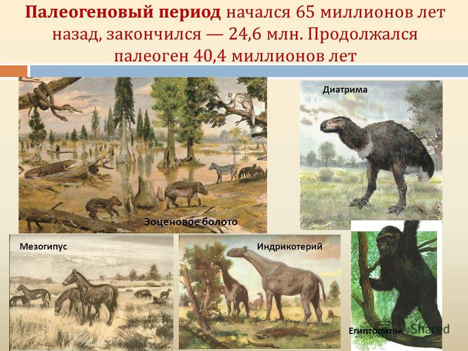 Палеогеновый период начался 65 миллионов лет назад, закончился 24,6 млн. Продолжался палеоген 40,4 миллионов лет Диатрима Египтопитек ИндрикотерийМезогипус Эоценовое болото