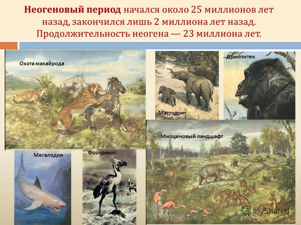 Неогеновый период начался около 25 миллионов лет назад, закончился лишь 2 миллиона лет назад. Продолжительность неогена 23 миллиона лет. Фороракос Мегалодон Мастодонт Дриопитек Охота махайрода Миоценовый ландшафт