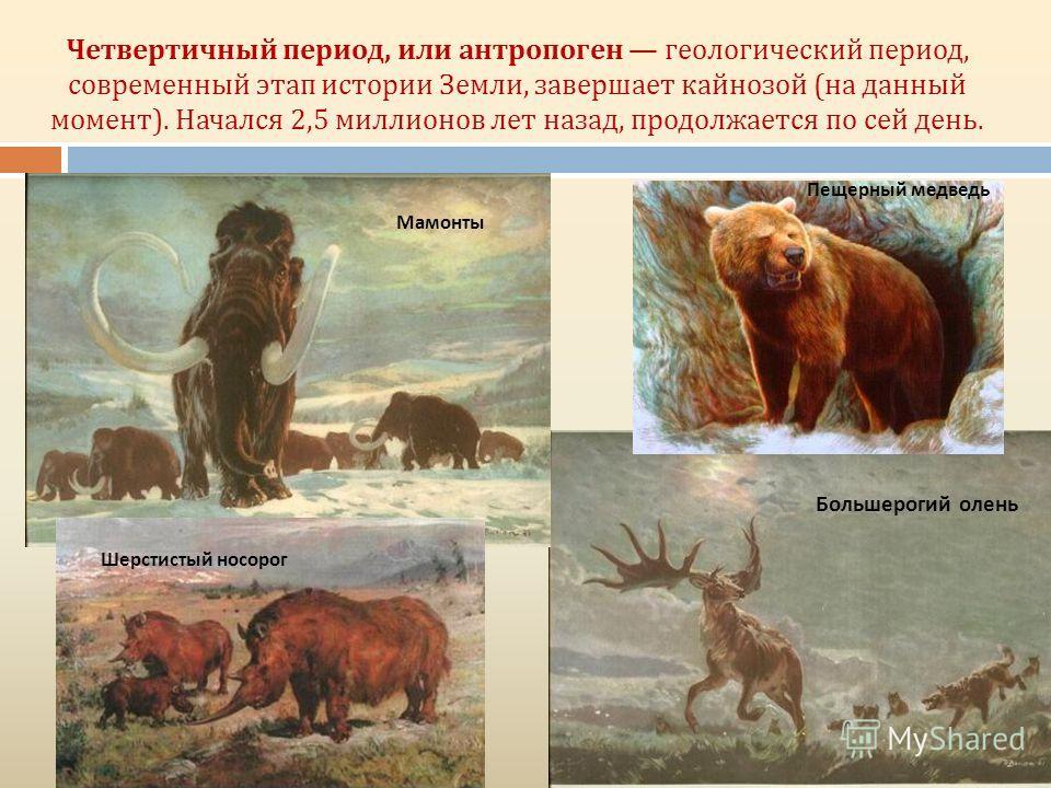 Четвертичный период, или антропоген геологический период, современный этап истории Земли, завершает кайнозой (на данный момент). Начался 2,5 миллионов лет назад, продолжается по сей день. Мамонты Большерогий олень Пещерный медведь Шерстистый носорог