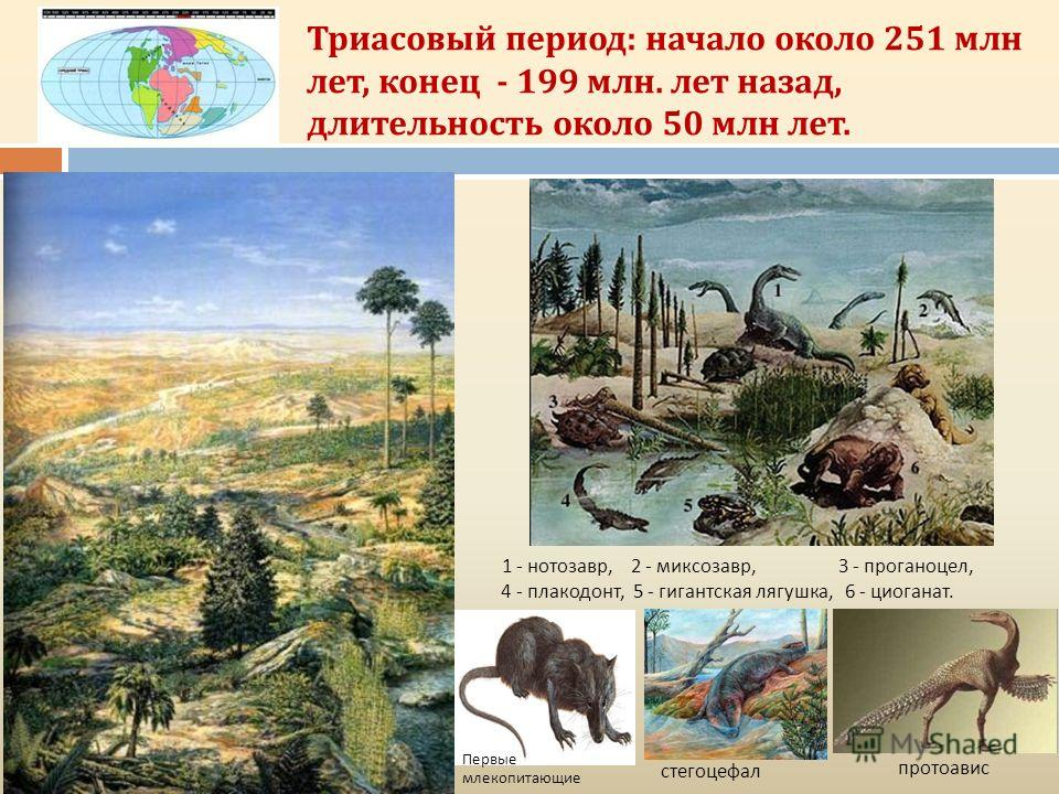 Триасовый период: начало около 251 млн лет, конец - 199 млн. лет назад, длительность около 50 млн лет. 1 - нотозавр, 2 - миксозавр, 3 - проганоцел, 4 - плакодонт, 5 - гигантская лягушка, 6 - циоганат. Первые млекопитающие протоавис стегоцефал