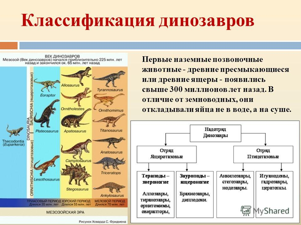 Классификация динозавров Первые наземные позвоночные животные - древние пресмыкающиеся или древние ящеры - появились свыше 300 миллионов лет назад. В отличие от земноводных, они откладывали яйца не в воде, а на суше.