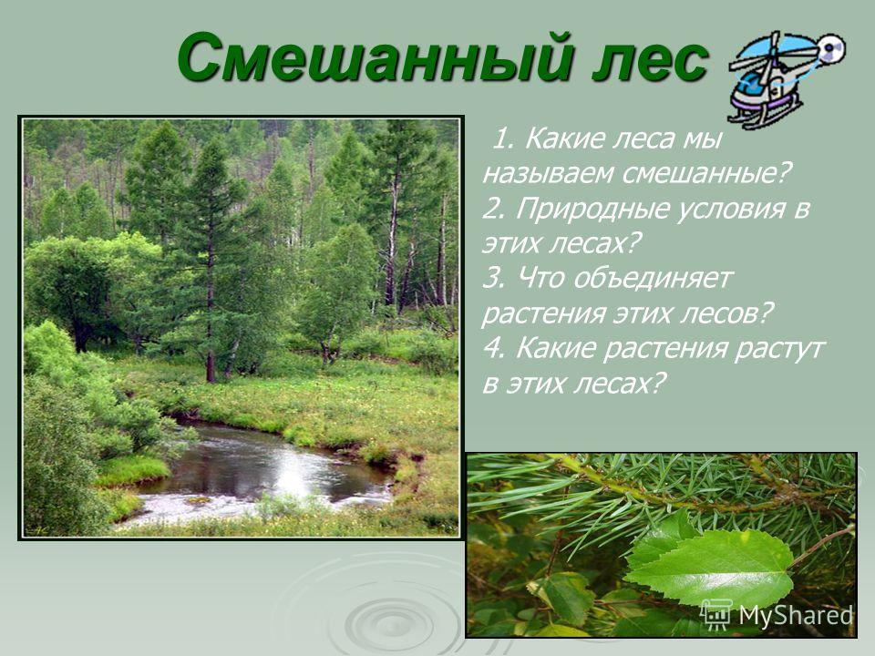 Смешанный лес 1. Какие леса мы называем смешанные? 2. Природные условия в этих лесах? 3. Что объединяет растения этих лесов? 4. Какие растения растут в этих лесах?