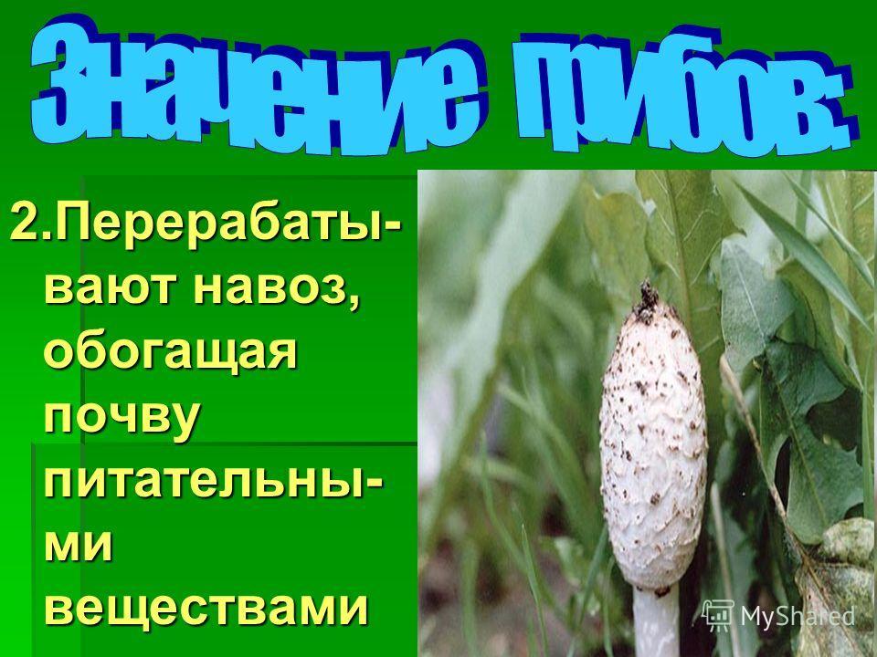 2.Перерабаты- вают навоз, обогащая почву питательны- ми веществами