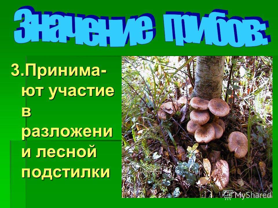 3.Принима- ют участие в разложени и лесной подстилки