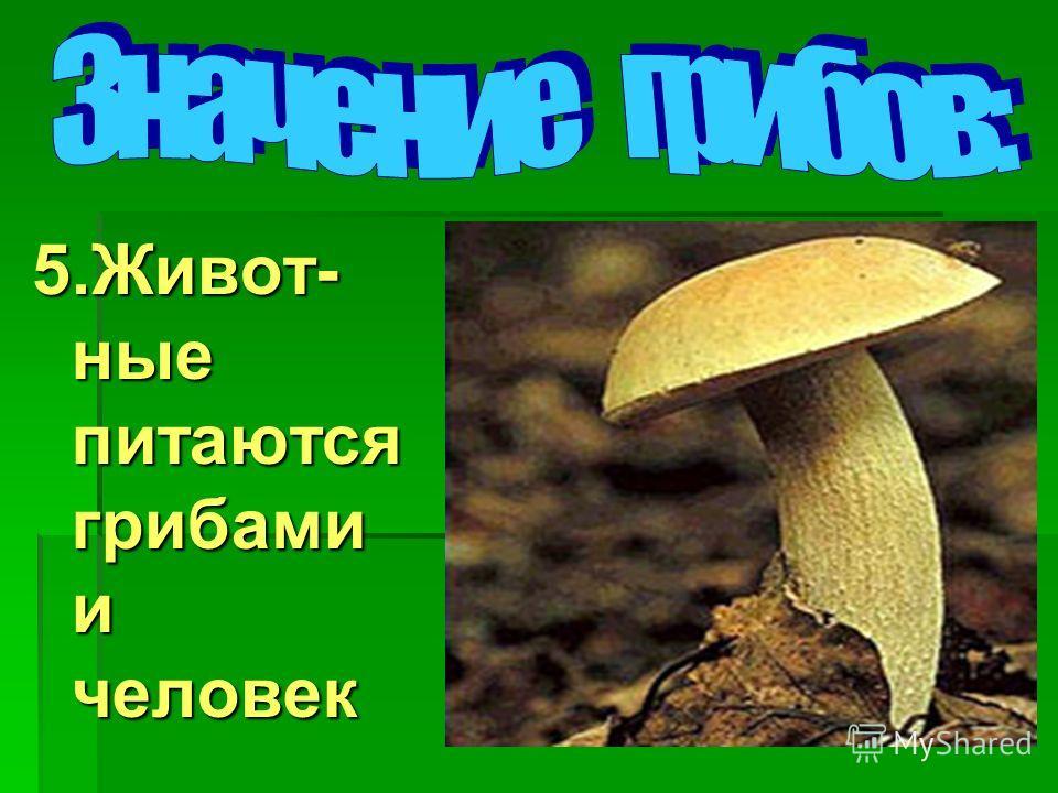 5.Живот- ные питаются грибами и человек