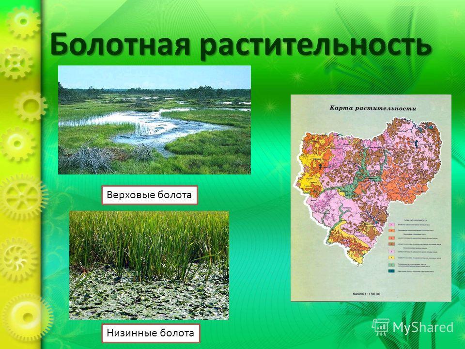 Болотная растительность Верховые болота Низинные болота
