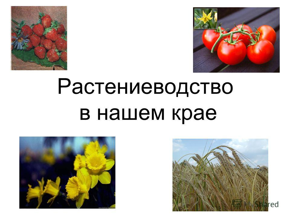 Растениеводство в нашем крае